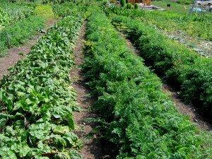 Основные принципы и технология выращивания сои